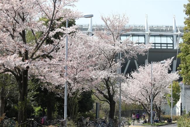 <桜も見られる味の素スタジアム>