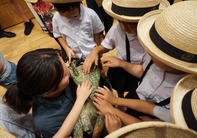 恐竜の赤ちゃんと子供たち
