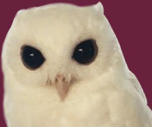 w-owl-lg
