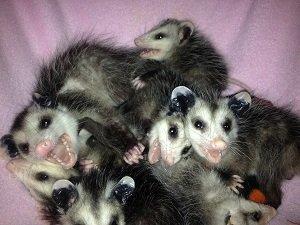 7 smiling 'possums