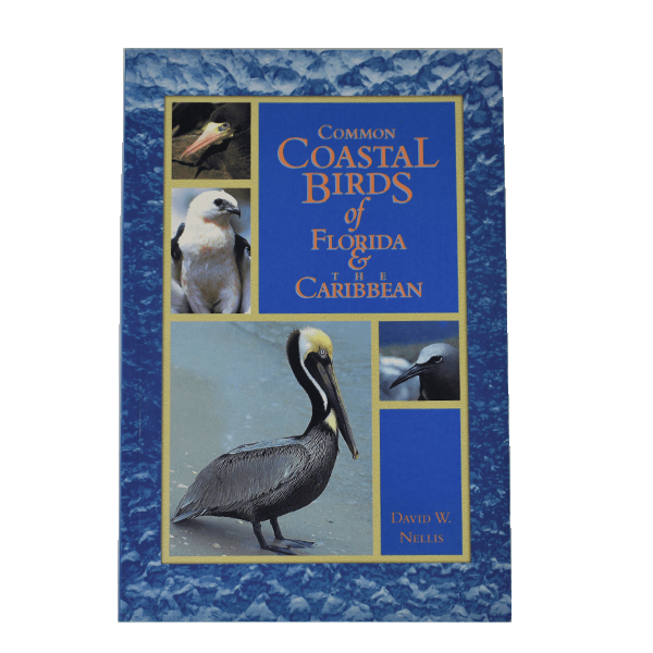 Common Coastal Birds of Florida