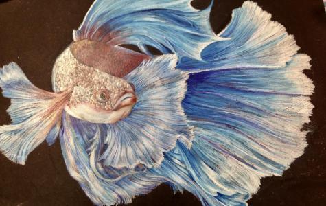 Kaitlin Martin Wins Dole Art Show