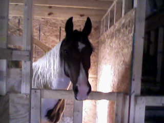 Profit, the horse who sparked the conversation