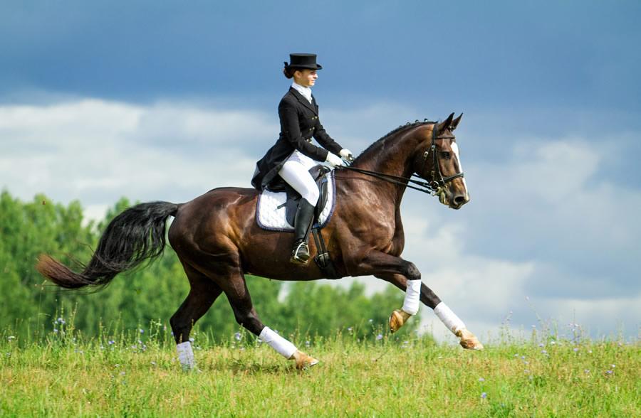 horse-riding-dressage-female-rider