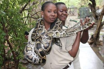 Black Mambas Women Anti-poaching Unit - two-women-with-snake