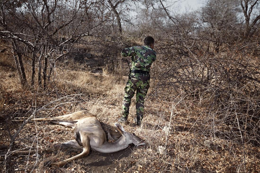 Black Mambas Women Anti-poaching Unit - woman-standing-with-deer