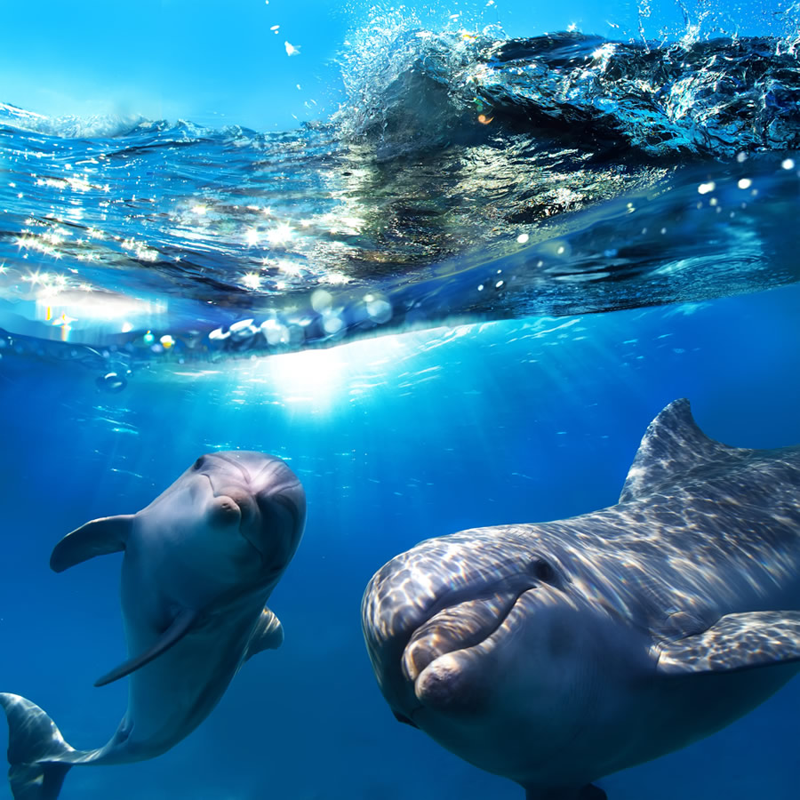 Orcas and Dophins - dolphins-underwater