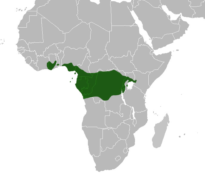 African Greys - range
