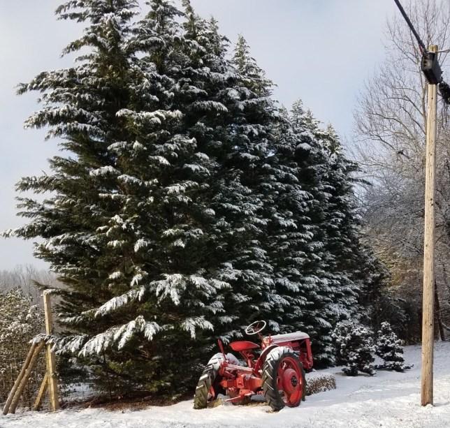 Winter Wonderland at Pryor's Nursery
