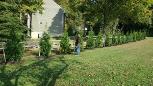 Green Giant Installation in Monkton MD