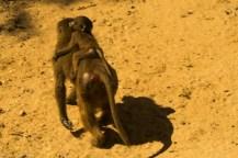 paryż zoo-10 (Kopiowanie)