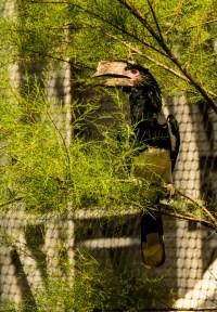 paryż zoo-18 (Kopiowanie)