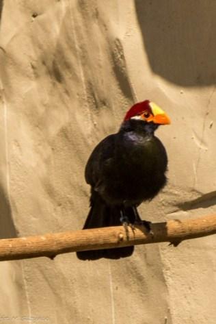 paryż zoo-21 (Kopiowanie)