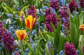 amsterdam kwiecień -16 (Kopiowanie)