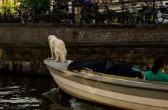 Amsterdam - Kochanie, wyprowadzimy psa na spacer?