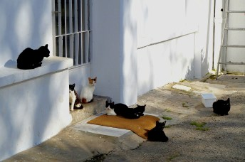 Tanger - swojski widok w Medinie