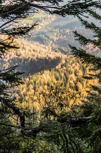 Babia Góra - widok między drzewami