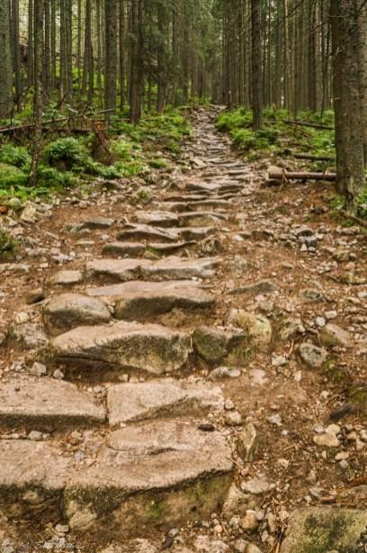 Tatry - kamienista ścieżka przez las