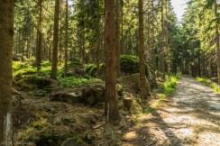 Błędne Skały - szlak wiedzie przez las