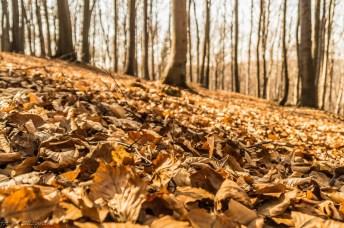 opadłe liście w lesie