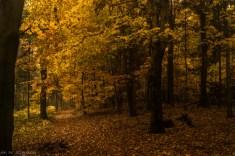 Główny Szlak Świętokrzyski - przyroda na szlaku jest piękna