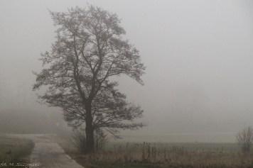 Główny Szlak Świętokrzyski - samotne drzewo we mgle