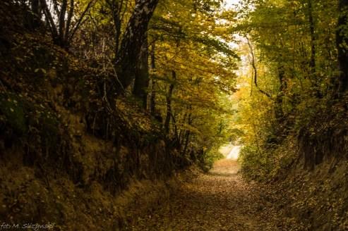 Główny Szlak Świętokrzyski - pomiędzy Gołoszycami a Nową Słupią