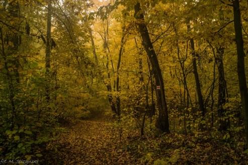 Główny Szlak Świętokrzyski - droga w lesie