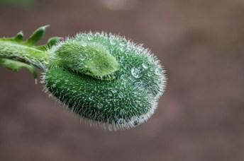 zielony kwiat z mikroskopijnymi kroplami wodu