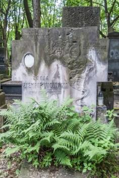 stare powązki - grób i paproć