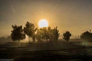 świt natura drzewa darłówko
