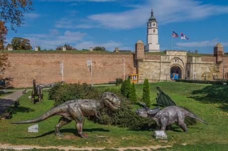 dinozaury twierdza kalemegdan belgradzka serbia