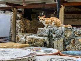 budva kot - jeden dzień w czarnogórze