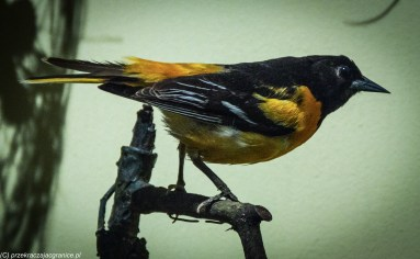 Londyn - Natural History Museum, eksponaty