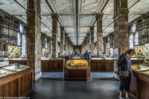 Londyn - Natural History Museum, ekspozycja