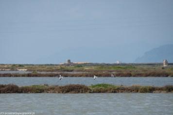 Saliny - ptaki migrujące uwielbiają te rejony