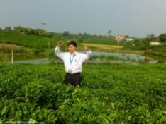 mężczyzna na plantacji herbaty w wietnamie