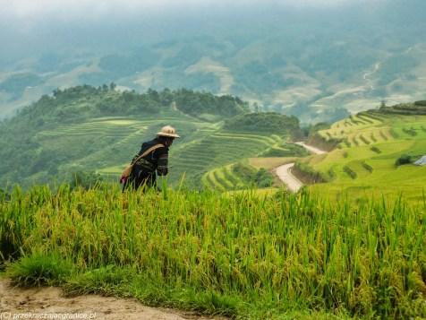 człowiek idący przez tarasy ryżowe w wietnamie