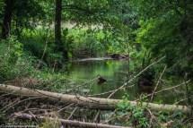 rzeka drzewa natura woda