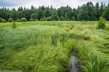 natura łąka przyroda krajobraz suwalszczyzna