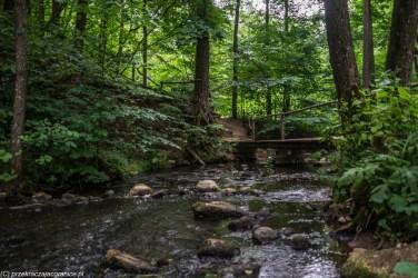 płytka rzeka w lesie