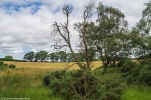 krajobraz pola i łąki drzewa