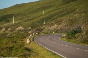 droga wśród wzgórz wzdłuż niej spacerują owce
