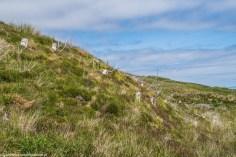 trawiasty stok górski