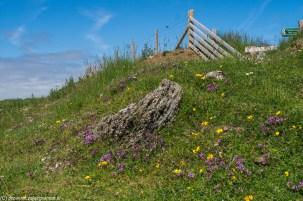 górka pokryta trawą i kolorowymi kwiatami