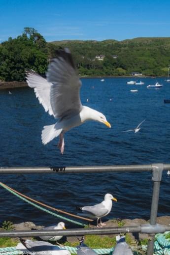mewa lądująca na nadbrzeżu