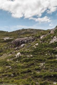 Fauna i flora - Loch Torridon