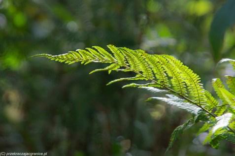 Warsztaty zielarskie - co robić w Bieszczadach