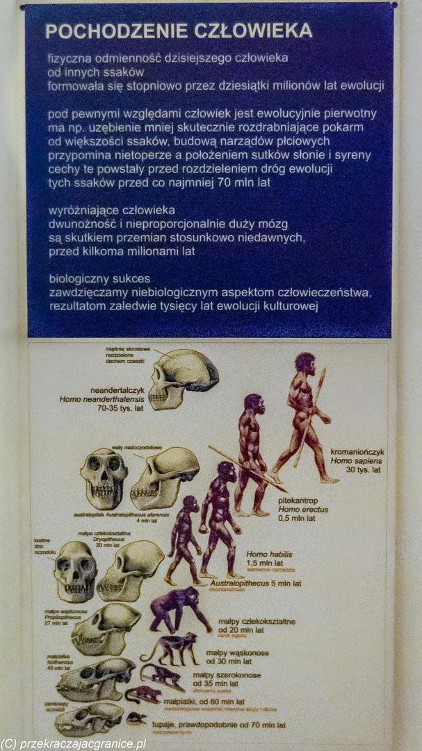 Muzea w Warszawie - Ewolucja