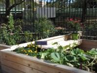 Garden IMG_1385